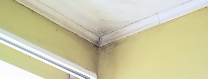 Find mold problems early with infrared thermography.